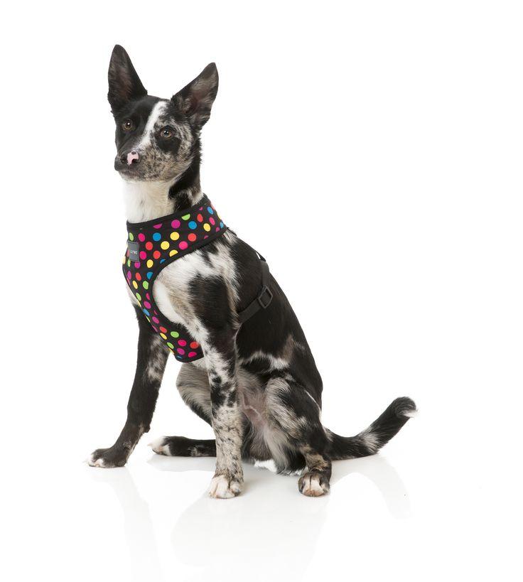 FuzzYard Cosmic Dog Harness