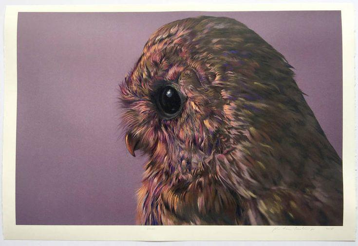 Wonderful Owls Illustrations