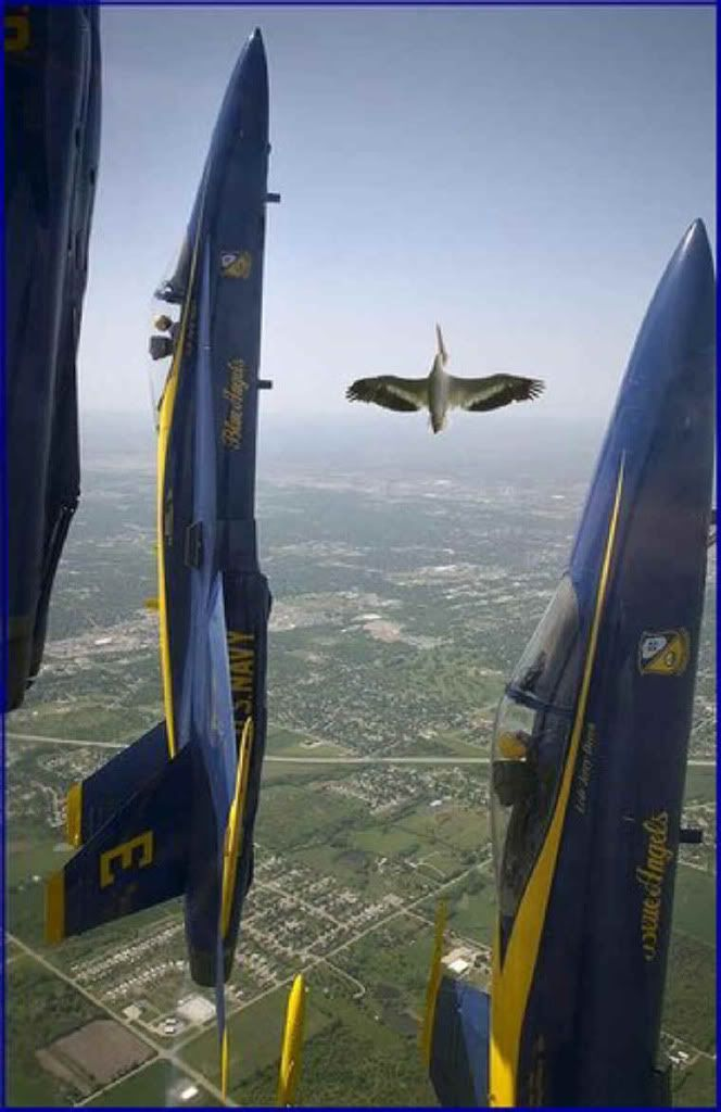 Guest Flyer for Blue Angles