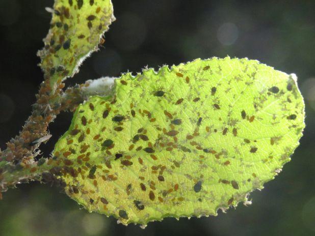 the 25+ best savon noir pucerons ideas on pinterest | insecticide