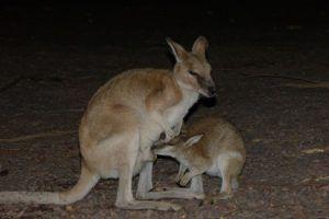 australie voyage en famille