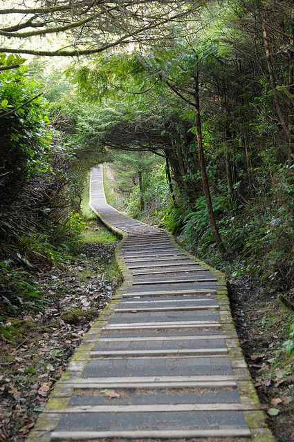 Hiking the Rainforest Trail in Tofino, British Columbia ~ Flickr - Photo Sharing!