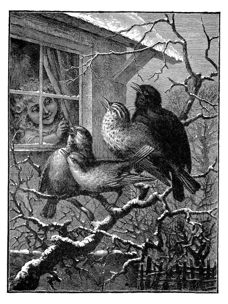 Antique images vintage bird clip art black and white illustration of birds on a