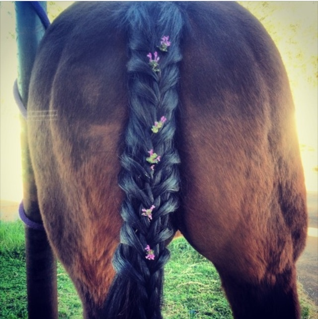 horse tail hair style 98 best images about hairstyle on ponies 5028 | 4798598a6642ae162713bb7f9d671162 this summer horse tail