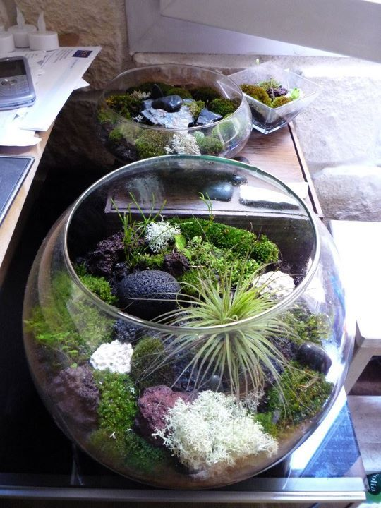 some of my moss terrariums