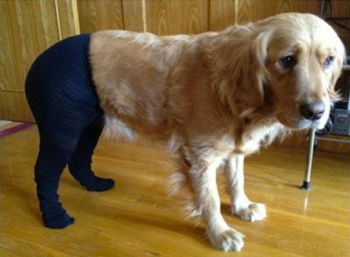 yet more dogs in pantyhose