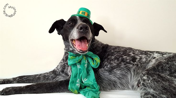 Happy St. Patrick's Day 2016 from Ruby the Bloggin' Dog and MyUntangled Life