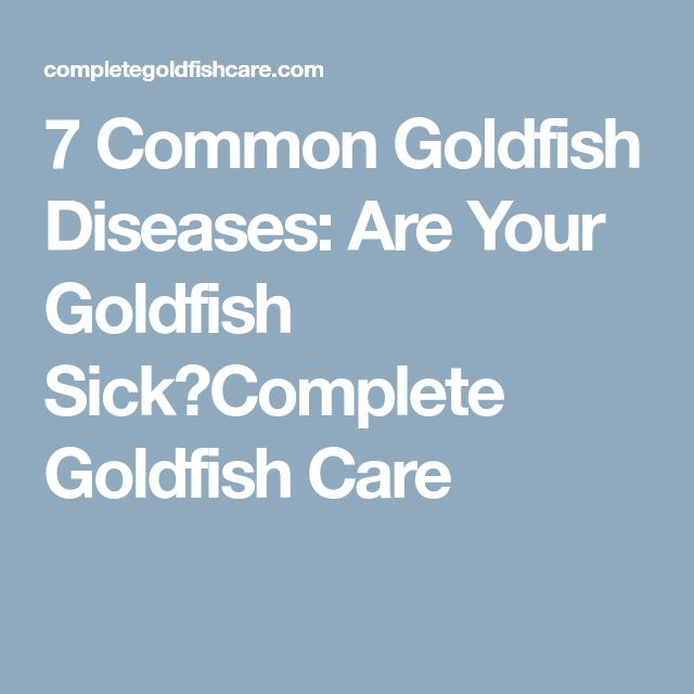 7 Common Goldfish Diseases: Are Your Goldfish Sick?Complete Goldfish Care