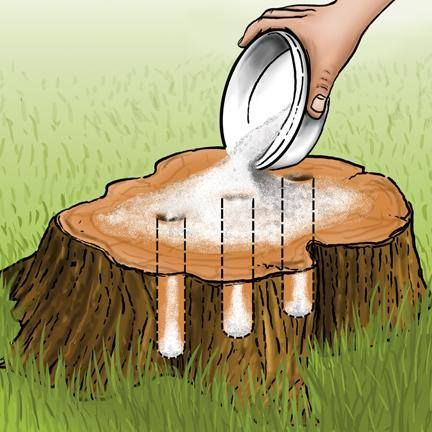 Drill a few holes and pour in some emspom salt. Will kill the remaining tree if you're trying to get out old stumps. Kind of neat trick