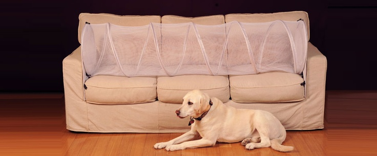 Keep Dogs Off Furniture With Couch