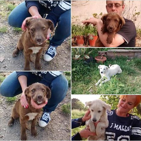 Cuccioli in adozione a Caserta