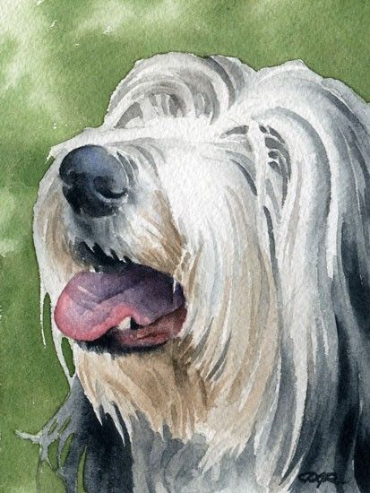 BEARDED COLLIE chien aquarelle signée tirage d'Art par l'artiste DJ Rogers