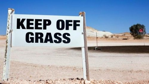 opal-fields-humor- they grown brown grass out here