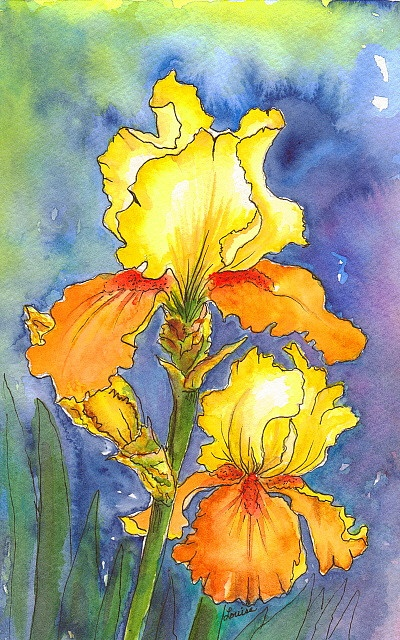 BLOOMIN' IRIS @ Louise Christian  WATERCOLOR & INK  I liked that little ''bloom'' up in the right corner, so I left it...:) The color of this Iris is pretty true to an Iris called ''SPICED CUSTARD''...:)    Iris  (EYE-ris)    The genus Iris gets its name from the Greek goddess Iris, who was goddess of the rainbow. In Greek mythology, Hera, who was Queen of Olympia, was impressed by Iris' purity and honored her with a flower that bloomed with all of the colors in her robe. Iris was also…