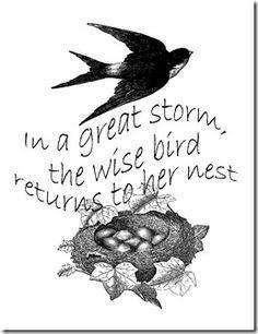 Resultado de imagen para nest bird phrases