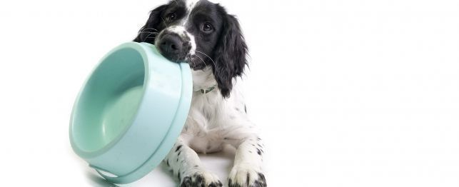 Commonly Asked Questions About Dog Nutrition