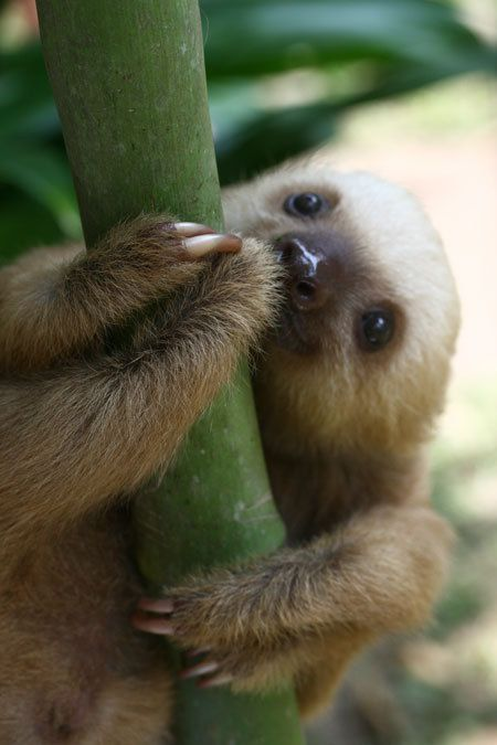 OMC LOVES: Bebe Sloths. My Spirit Animal.