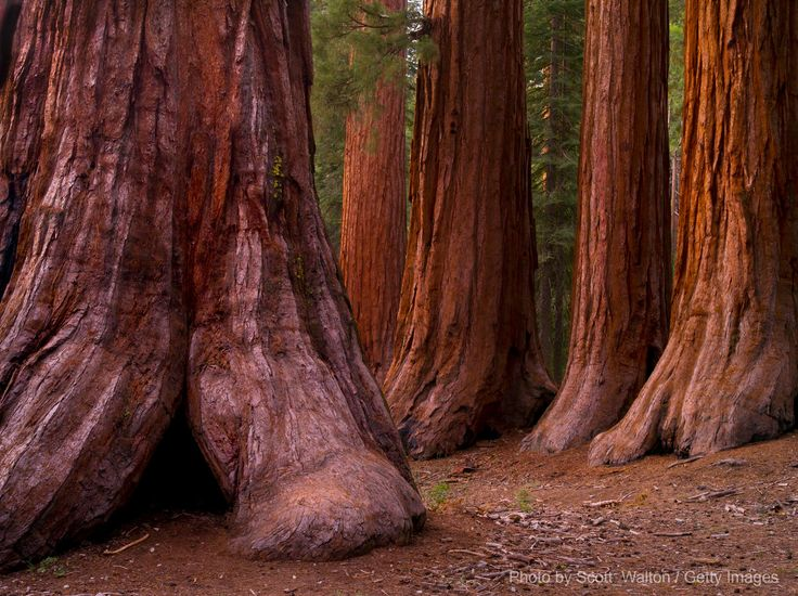 Visit the Merced Grove of Giant Sequoias   Hotel Charlotte