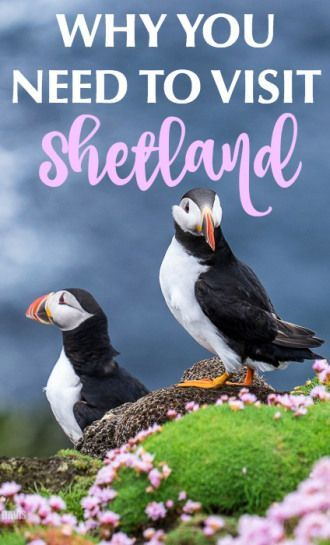 Tips for travel to the Shetland Islands in Scotland, including where to go, transportation, the best food to eat, and lots of photos of adorable puffins!