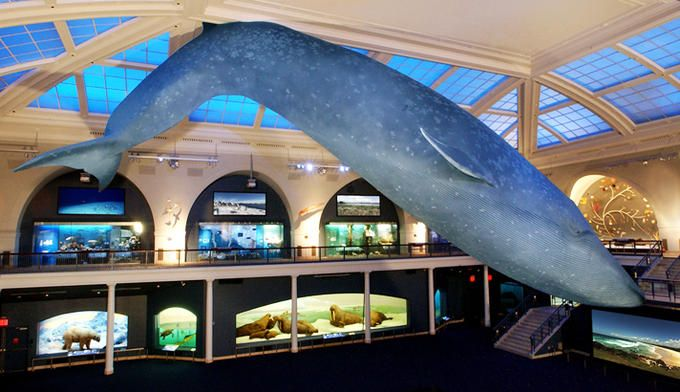 "Milstein Hall of Ocean Life...home of the Blue Whale, the center piece of the museum. When I first saw this, I was like, ""WOW! how'd they do it?"""