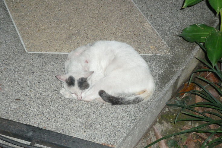 Another Cat @ Ao Nang