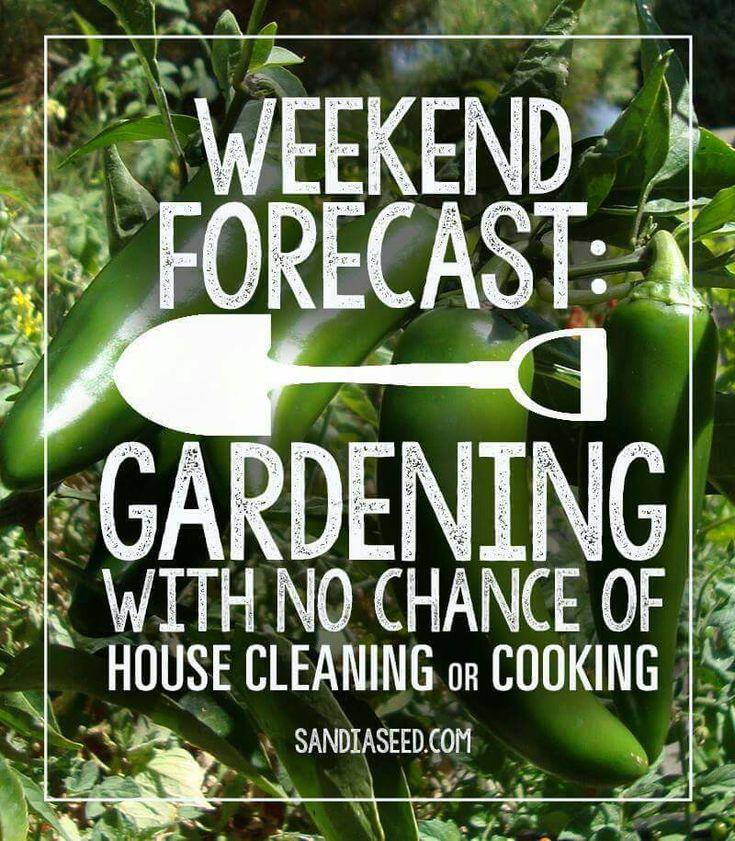 Weekend forecast- Gardening
