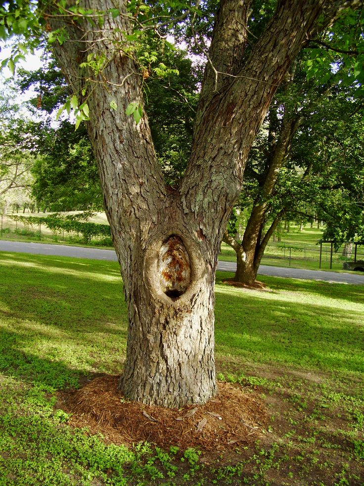 Filling holes in tree trunks how to patch a hole in a
