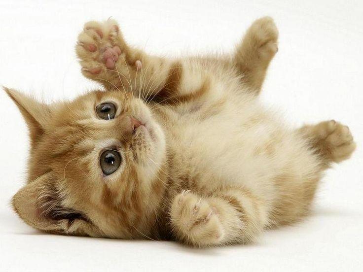 A Sondrio i gatti più belli al mondo | Radio TSN