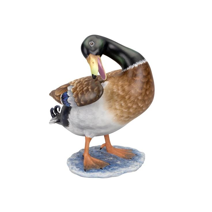PÁSSAROS - Duck Albufeira