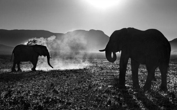 Olifant -Fotografie van  David Yarrow