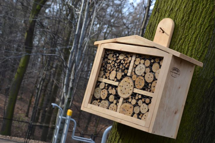Hotele dla owadów / Insects hotel [foto: Mateusz Łysek]