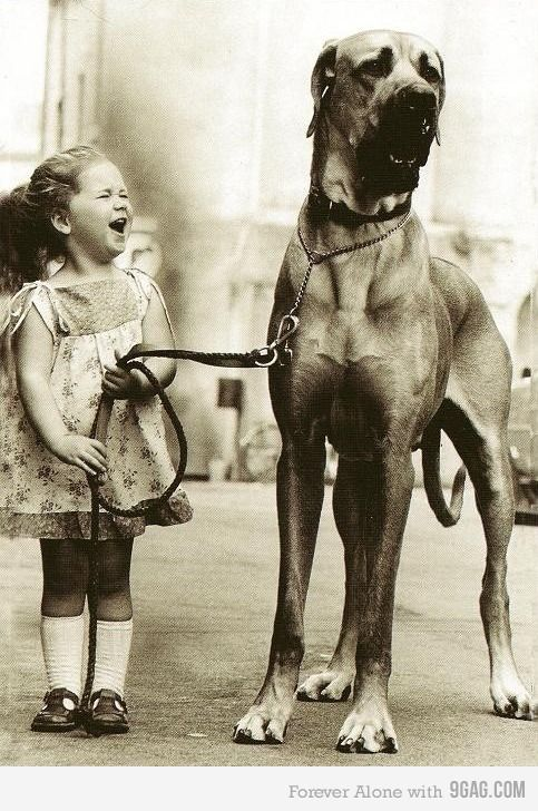 funny great dane pictures with captions   Just a Girl and her Dog