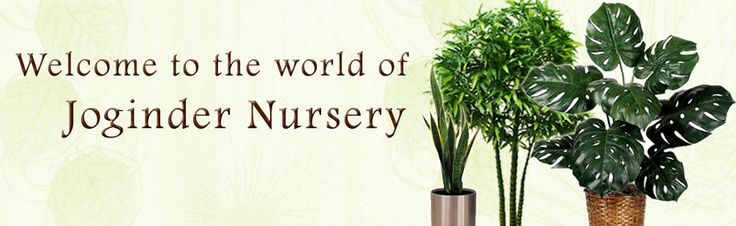 Welcome to the World of Joginder Nursery