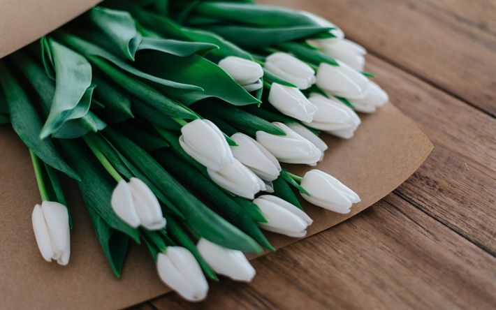 Download wallpapers white tulips, spring bouquet, spring, bouquet of tulips, white flowers