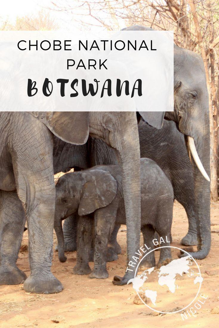 Chobe National Park Botswana Africa Travel National Parks