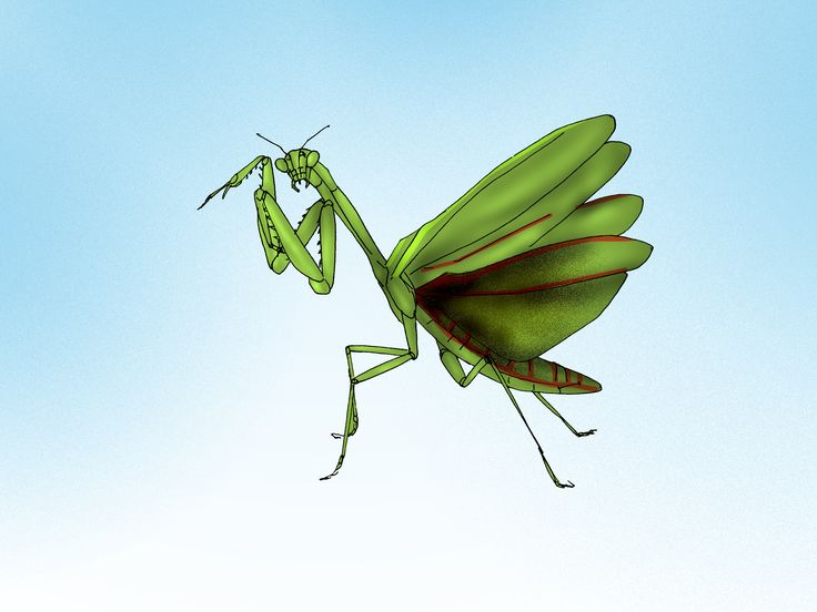 Get ride of stink bugs naturally