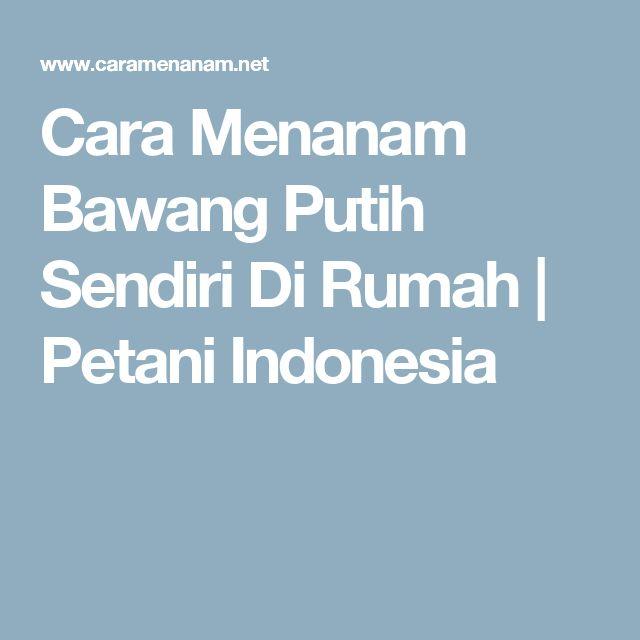 Cara Menanam Bawang Putih Sendiri Di Rumah | Petani Indonesia