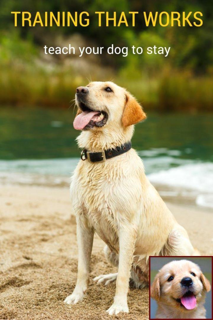Dog Behavior In Shelter And Dog Behavior Barking For Attention
