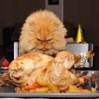 Animal fica famoso por ser o gato mais mal humorado da web