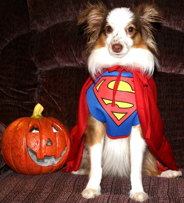 75 best Dogs All Dressed Up images on Pinterest Dresses, Halloween costume ...