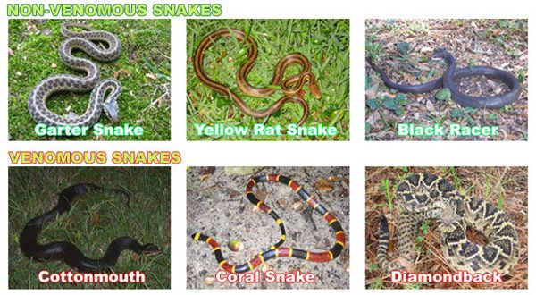 How can you tell what kind of snake you found, and if it is poisonous