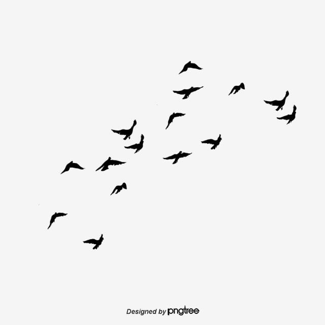 Flying Bird Bird Clipart Fly Sky Png Transparent Clipart Image And Psd File For Free Download In 2020 Birds Flying Flying Bird Silhouette Banner Background Images
