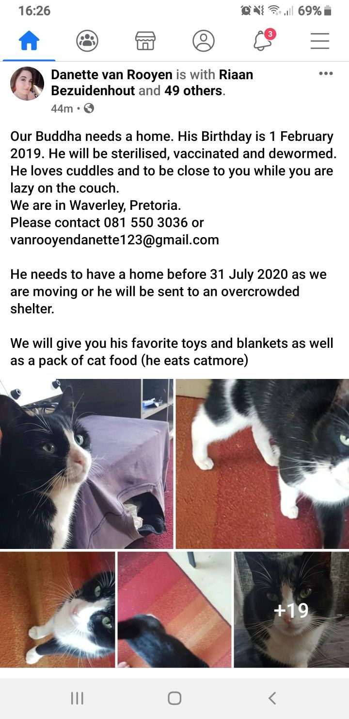 Tom Cat Kitten Buddha Needs Home Pretoria In 2020 Kitten Buddha Cats And Kittens