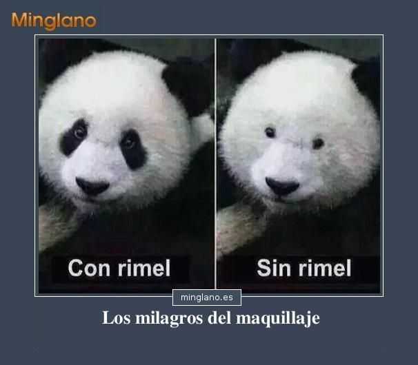Fotos de animales con frases divertidas. Yep, Pandas are totally ordinary without eyeliner.