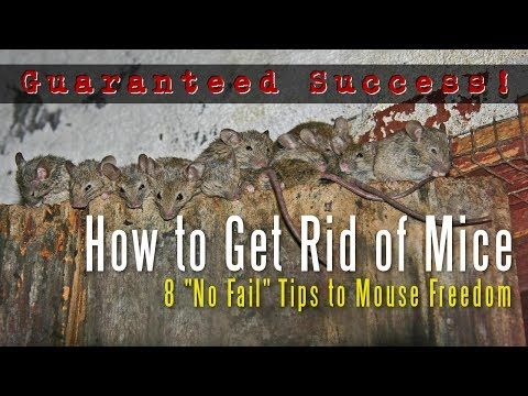 17 beste ideen over getting rid of mice op pinterest kippenhok tuin how to get rid of mice in your house amazing tips for getting rid of ccuart Gallery