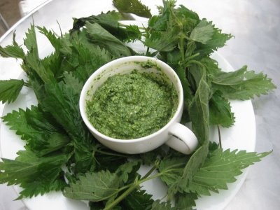 Stinging Nettles soup,  Nettles are an ancient treatment for arthritis