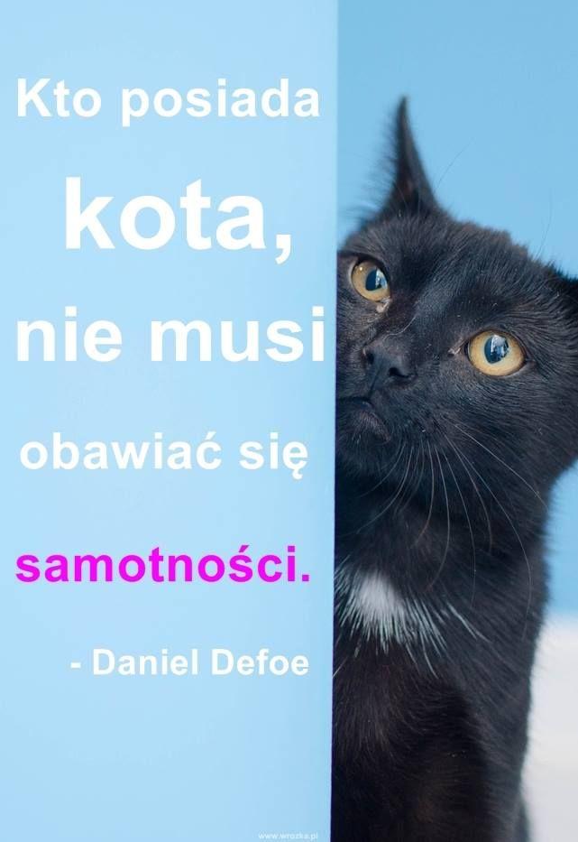 Okład Z Kota Koty Kocham Koty I Zwierzęta