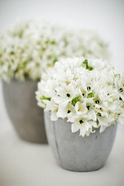 Try bouvardia: http://www.stylemepretty.com/2015/04/16/get-the-look-wedding-flower-alternatives/