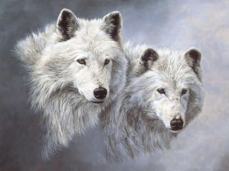 Pictures, white wolves wallpaper - SIZE: 1280x960px wallpapers, pictures, free download