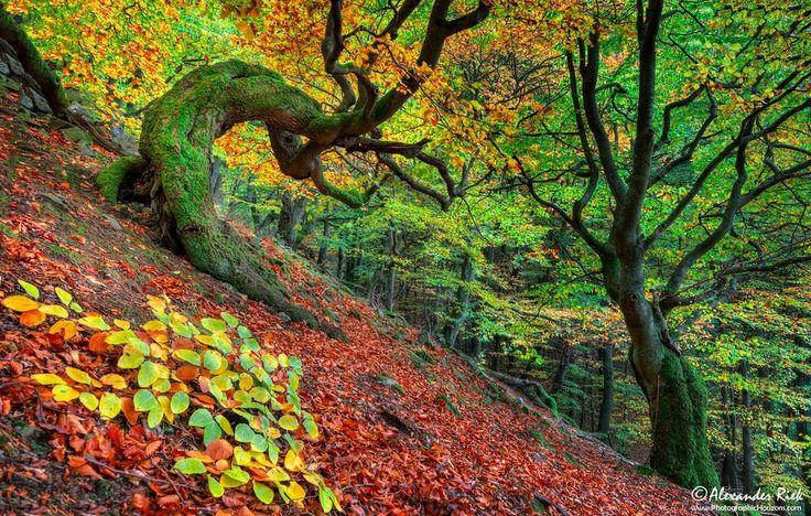 Kellerwald forest, Germany